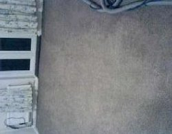 Rental Property Carpet Damage